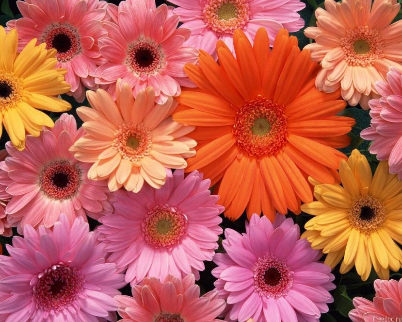 8 марта - Женский День, цветы  